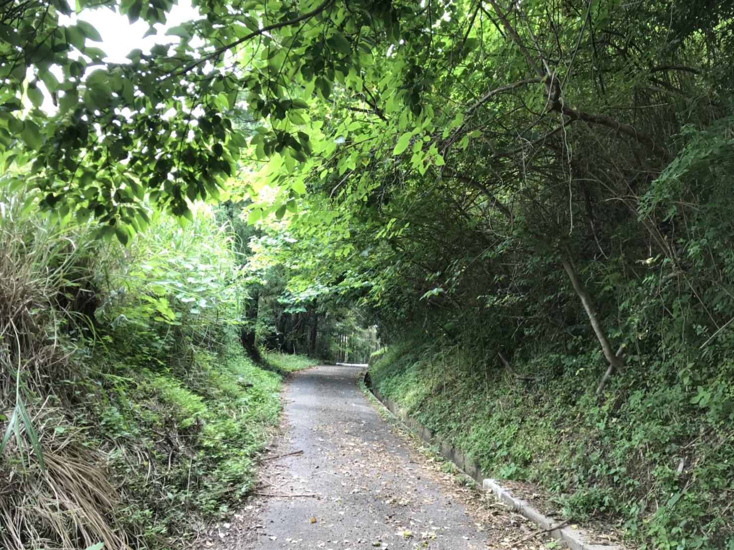 山の入り口までの道中